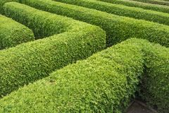 Green hedges of a labyrinth seen from above stock image
