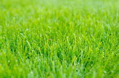 Detail of lawn Stock Images