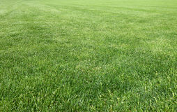 Detail of the lawn of the famous Miracle Square Royalty Free Stock Images