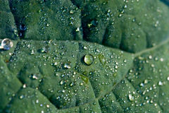 Detail of a leaf with dewdrops Stock Image
