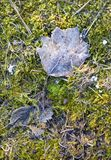 Leaf with light hoar frost of moss gives a harmonic background. Detail of leaf with light hoar frost of moss gives a harmonic background royalty free stock image