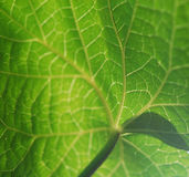 Detail of a leaf Stock Photo