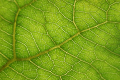 Detail of a leaf Stock Image