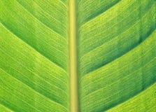 detail leafen Arkivbilder