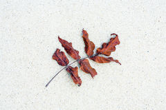 Detail of leafes at the beach Stock Image