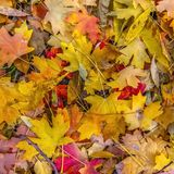 Detail of leaves fallen on the ground in autumn stock photos