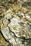 Detail limestone and quartz conglomerates Stock Image