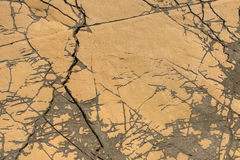 Detail of limestone surface Royalty Free Stock Image