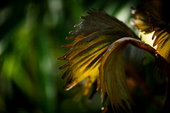 Detail of little green leaves in the morning light stock photo