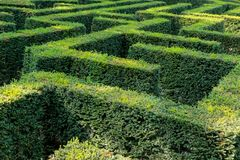 Detail of a living fence shaped as a maze. stock images