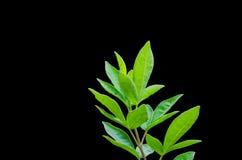 Detail lokalisierte Blätter Stockfoto