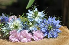 Love in a mist Nigella damascena and carnations. Detail of Love-in-a-mist Nigella damascena flower Royalty Free Stock Image