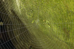 Detail macro spider web green background Royalty Free Stock Photo