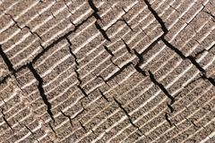 End grain with cracks brown stock photos