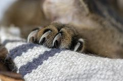 Detail of marble cats paw with clamped claws, ready for fight royalty free stock photo