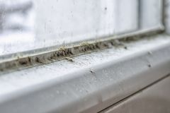 Mold and dirt on the window. Detail of mold and dirt on the glass of window. Toxic mildew stock photography