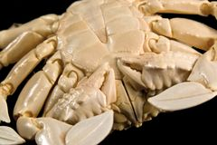 Detail of a moon crab Stock Photos