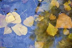 Detail from moos in autumn Stock Images