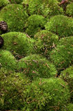 Detail of moss stock images