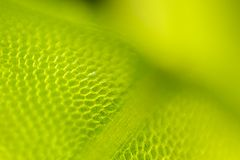 Detail of moss leaf (Plagiomnium affine) Royalty Free Stock Photography