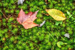 Detail of moss with leaves stock photos