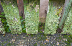 Detail of moss and lichen on  fence. Detail of moss and lichen on wooden fence Royalty Free Stock Image