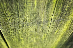 Detail of moss on wooden fence Royalty Free Stock Image