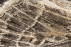 Detail of a moth wing Stock Photos