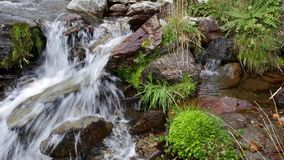 Detail of mountain river with waterfall and lush vegetation. Detail of mountain river with waterfalls strong stream of water and lush vegetation in the Pyrenees stock video footage