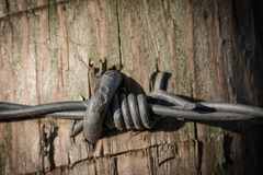 Macro view of barbed-wire seen on a border control crossing point. royalty free stock image
