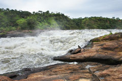 Detail of the Murchison Falls Royalty Free Stock Images