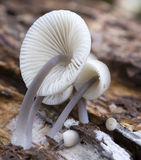 Detail of mushroom Royalty Free Stock Photos