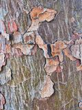 Abstract Bark Pattern on Native Australia Tree. Detail of a natural abstract textured bark pattern on an Australian native tree stock photo