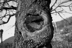 Detail from nature in autumn - old oak tree with knot stock image