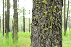 Detail of nature in pine forest Stock Photography