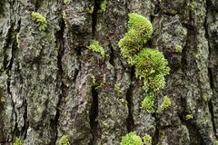 Detail of nature in pine forest Stock Image