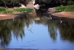 The detail of the nature. The river that runs through the village with the birds Stock Photo