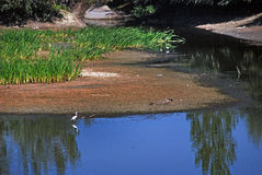 The detail of the nature. The river that runs through the village with the birds Royalty Free Stock Photos