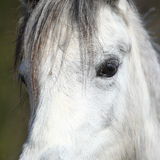 Detail of nice pony Stock Photography