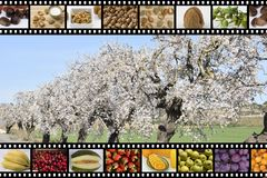 Fruits ripe and dry. Detail of numerous fruits represented as photographs Stock Photos