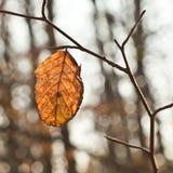 Detail of oak leaf Stock Photos