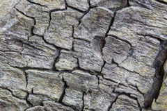 Detail of oak tree bark Royalty Free Stock Photography