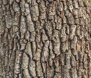 Detail of oak tree bark Stock Photos