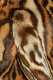 Detail of ocelot fur. Background Stock Image