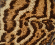 Detail of ocelot fur. Background Royalty Free Stock Images
