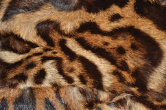 Detail of ocelot fur. Background Stock Photo