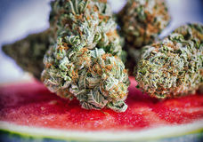 Detail Of Cannabis Buds Watermelon Marijuana Strain Over A Wat Royalty Free Stock Photo