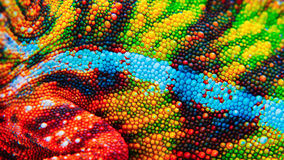 Detail Of The Particular Skin Of A Chameleon. Stock Photos