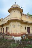 Detail of old building with donkeys in Jaipur, India Stock Photo