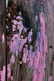 Old Chipped Paint Painted Wooden Fence Wall Rusty Nails Royalty Free Stock Photos